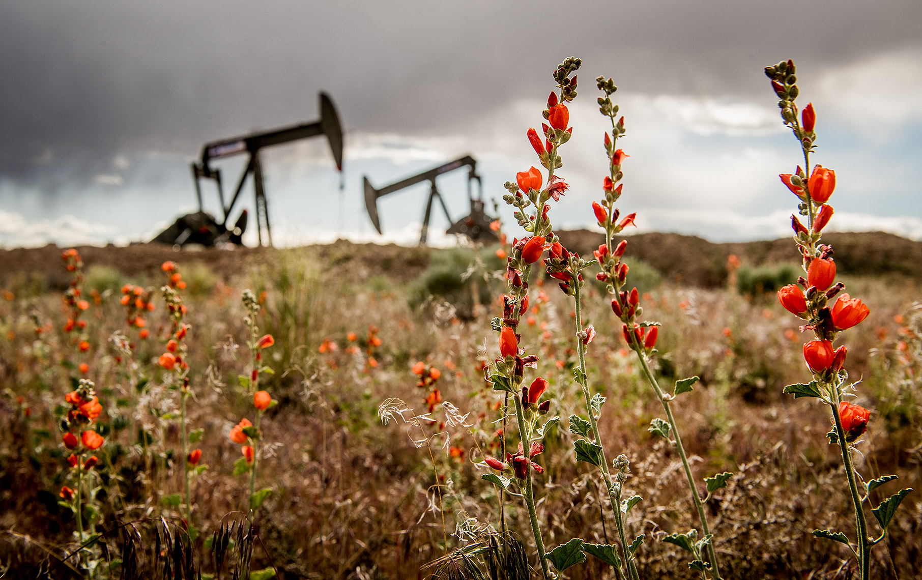Flowers in Oilfield Photograph
