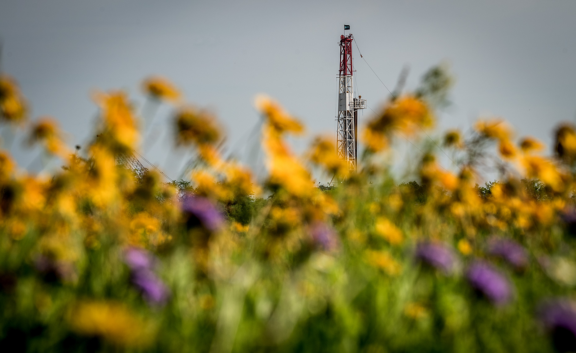 Flowers and Oil Drilling Rig Photo