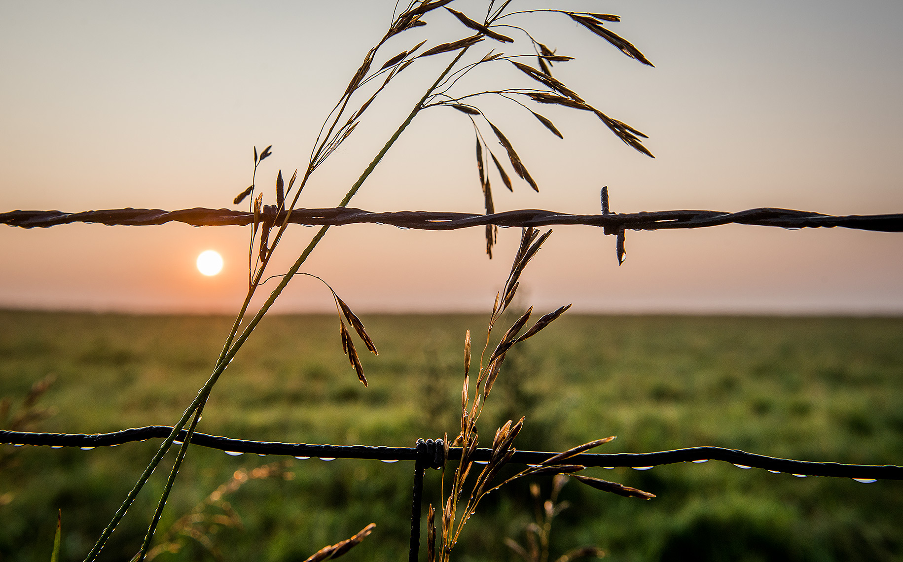 Barbed Wire Fence at Sunrise
