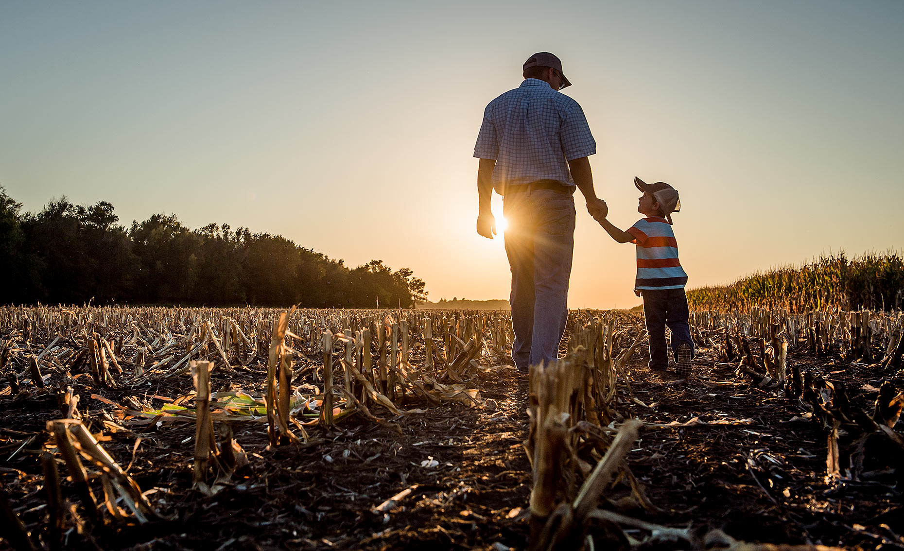 Father and Son Walking in Cornfield