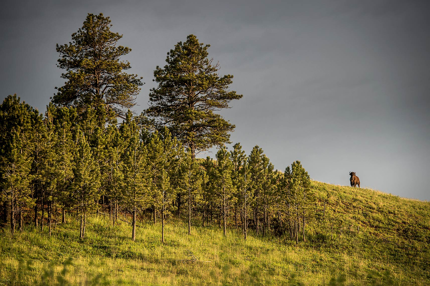 Custer State Park Photograph