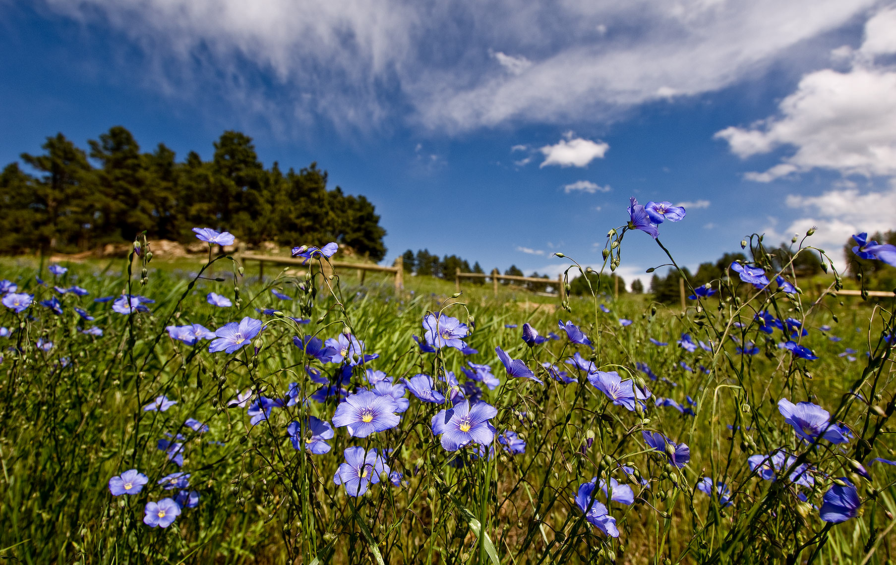 Black Hills Flowers Photograph