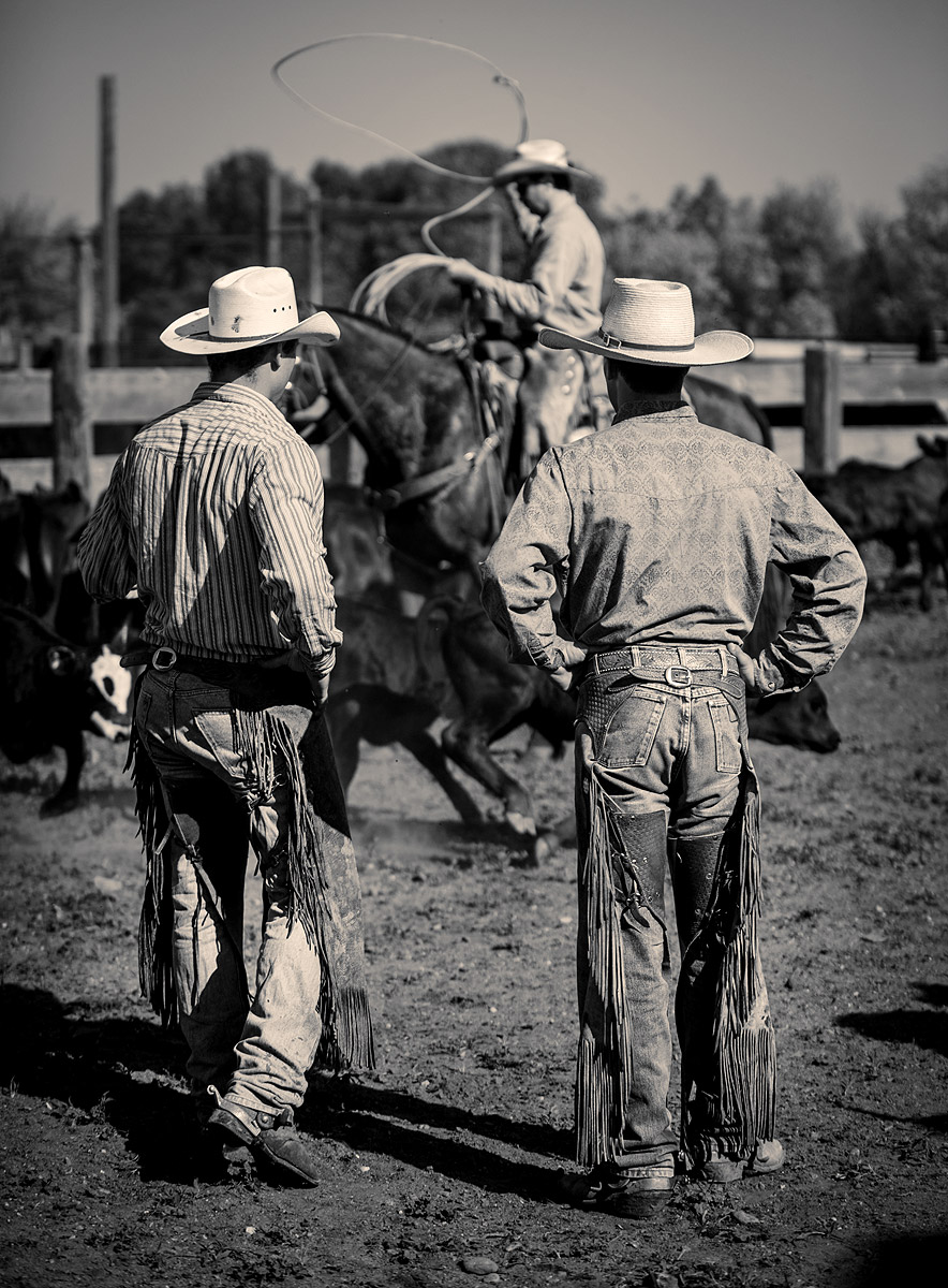 Cowboy Roundup Photography