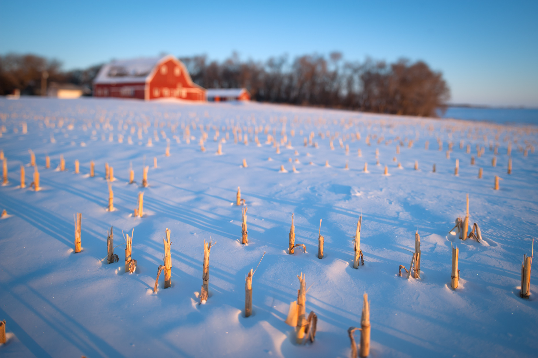 Cornfield and Snow Photography in Winter