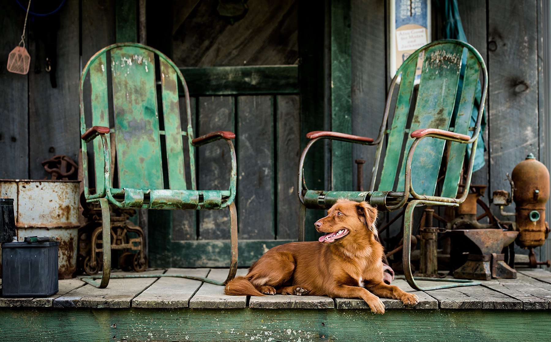 Dog on Front Porch