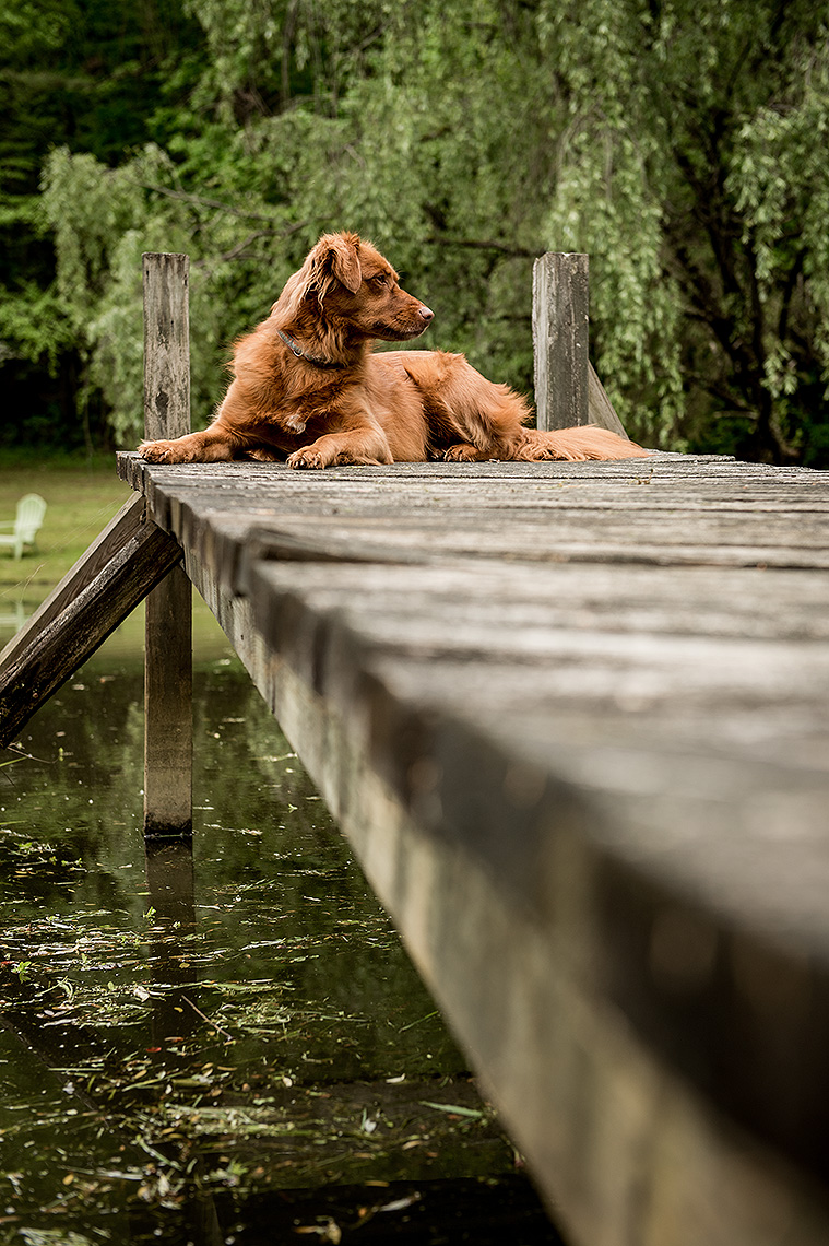 Dog on the Dock Photograph