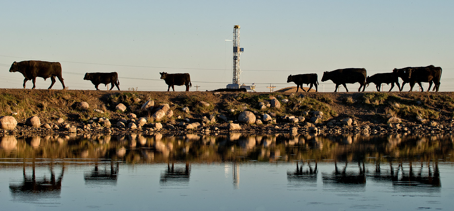 Cattle Herd and Oil Rig