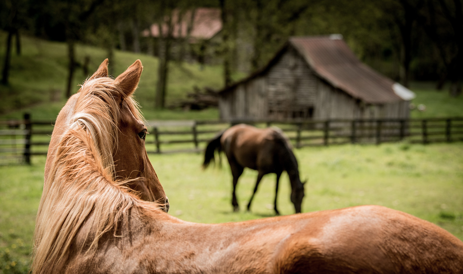 Horse Photography and Livestock Photography