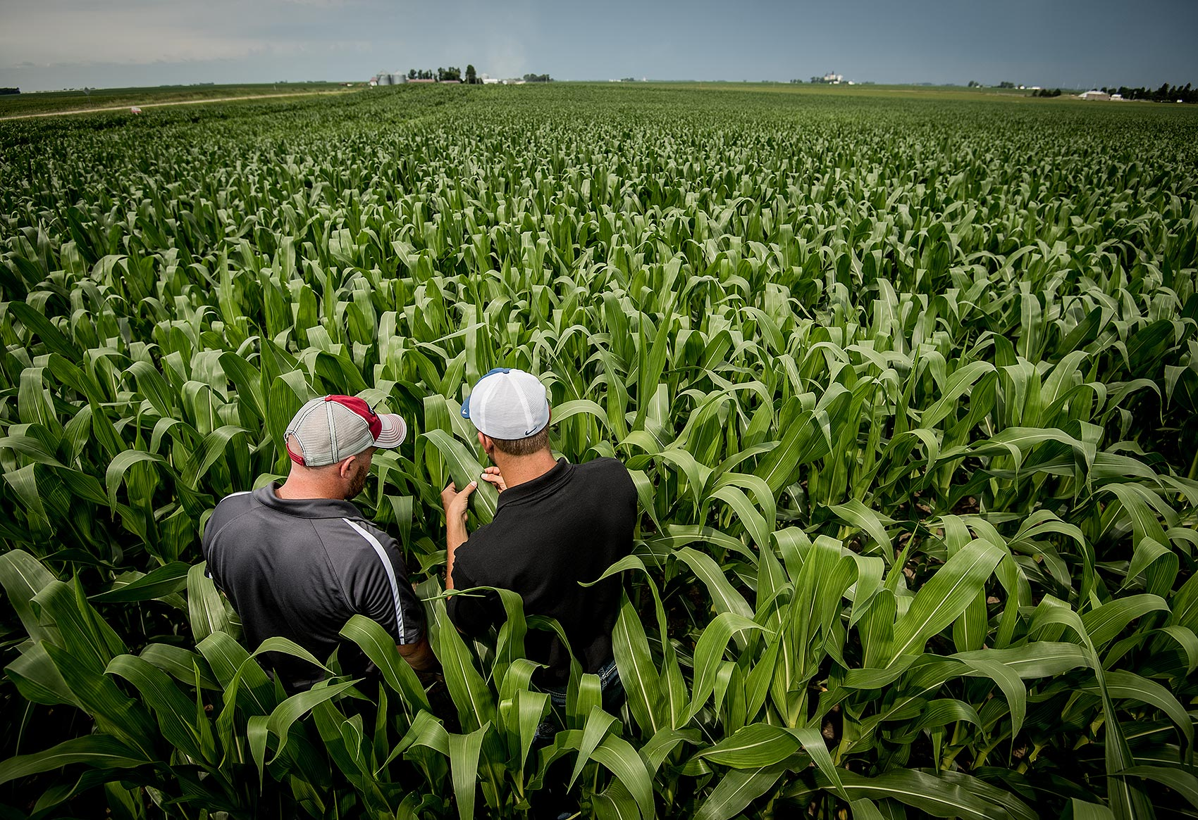 Agronomists Checking Corn in Field