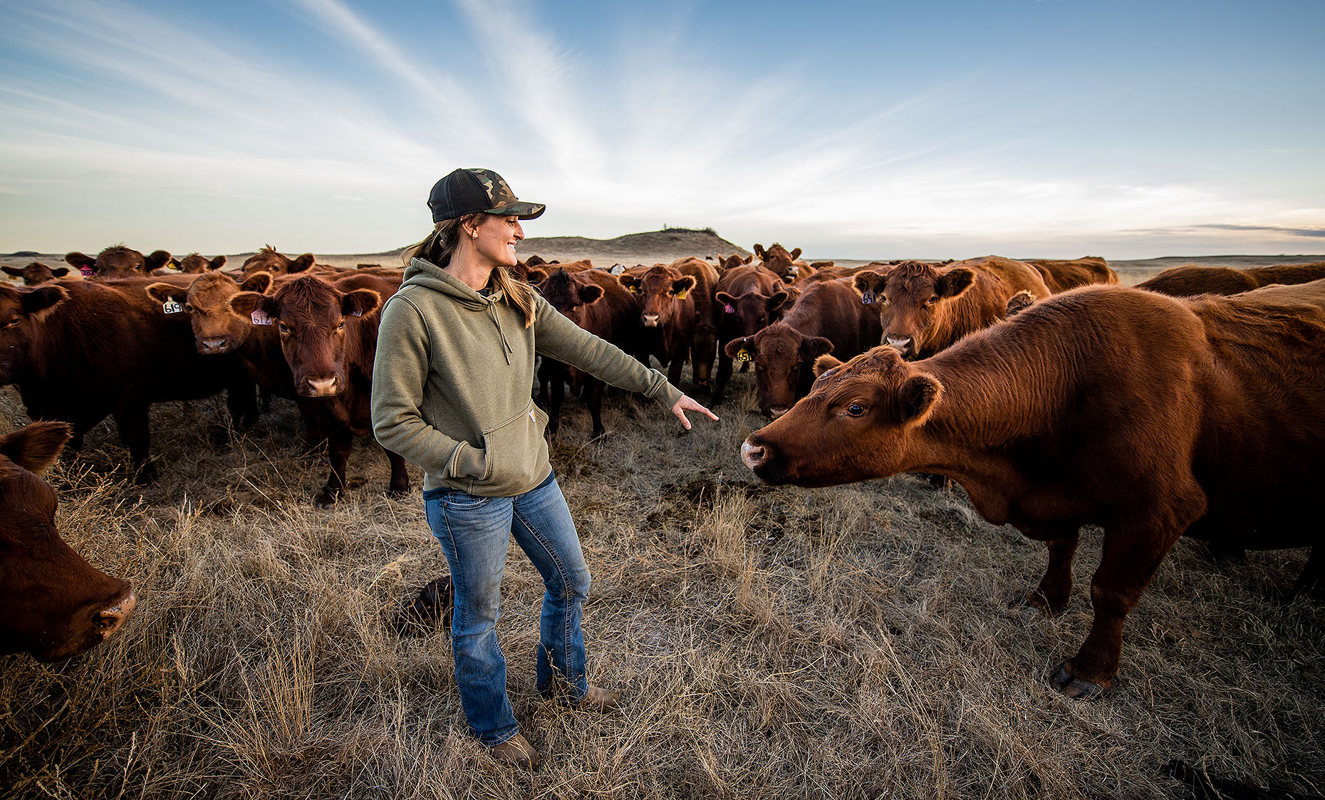 Woman Rancher and Cattle