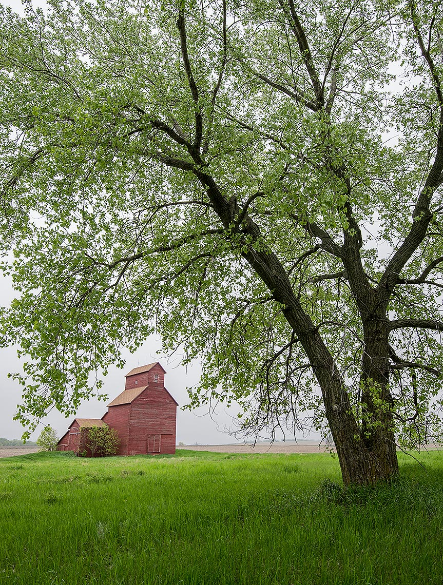Grain Elevator and Tree