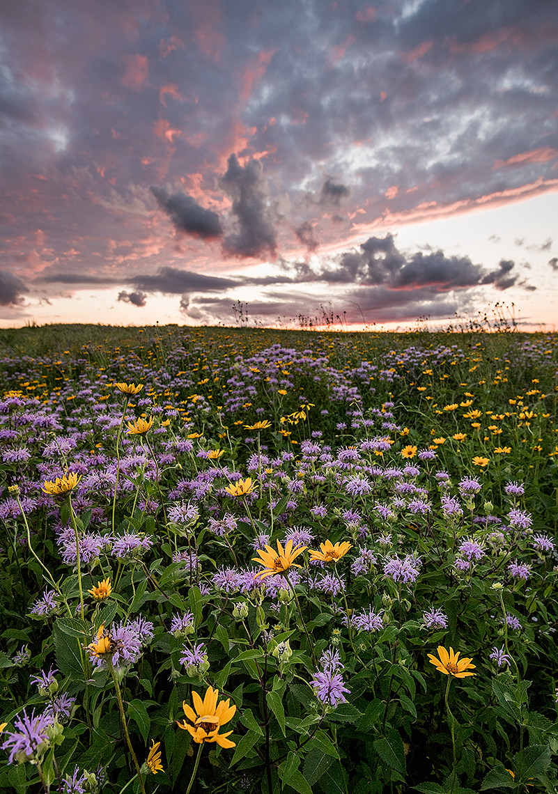 Prairie Flowers and Sunset Photo