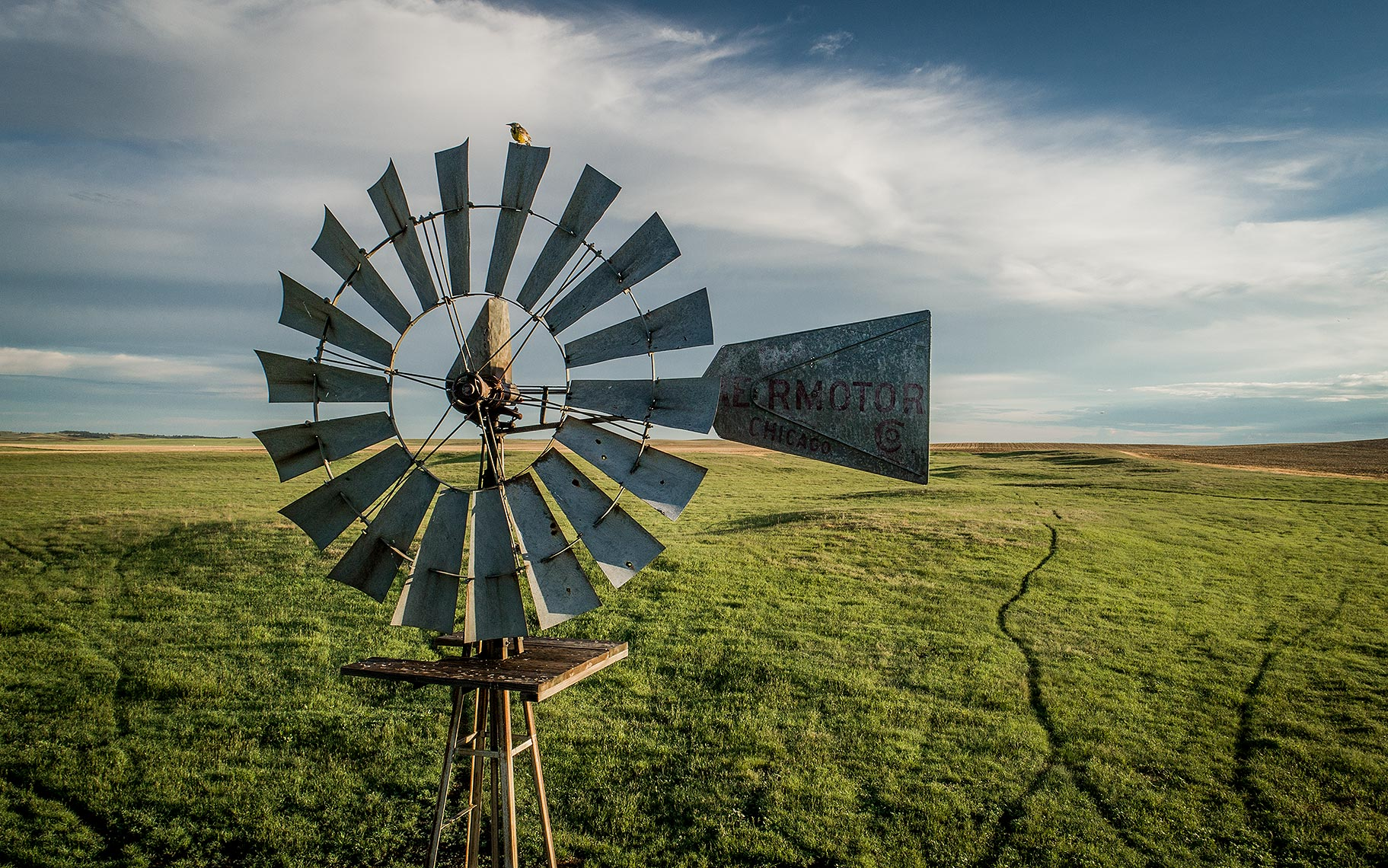 Windmill and Meadowlark Photo