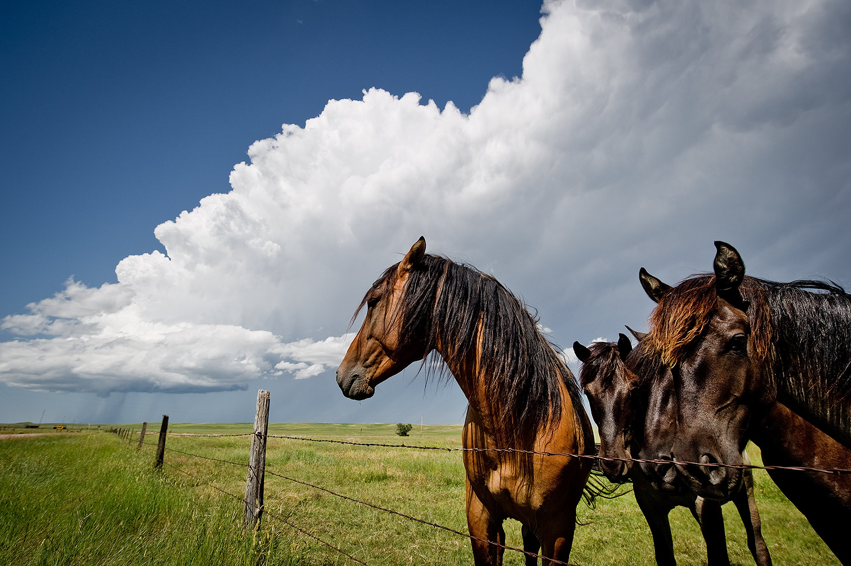 Horses and Thunderstorm