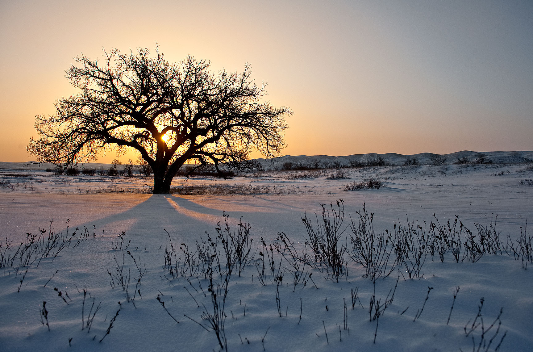 Winter Tree and Sunrise