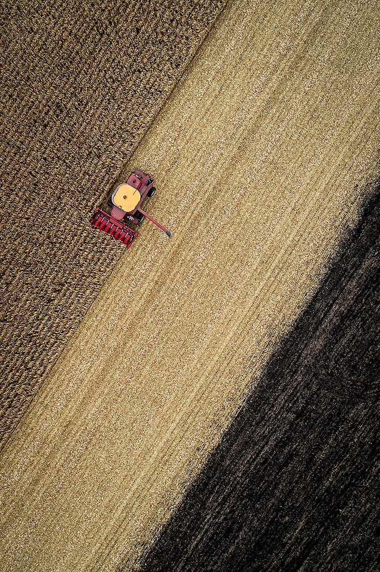 Drone Photograph of Corn Harvest