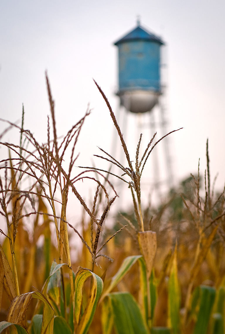 Cornfield and Watertower Photograph