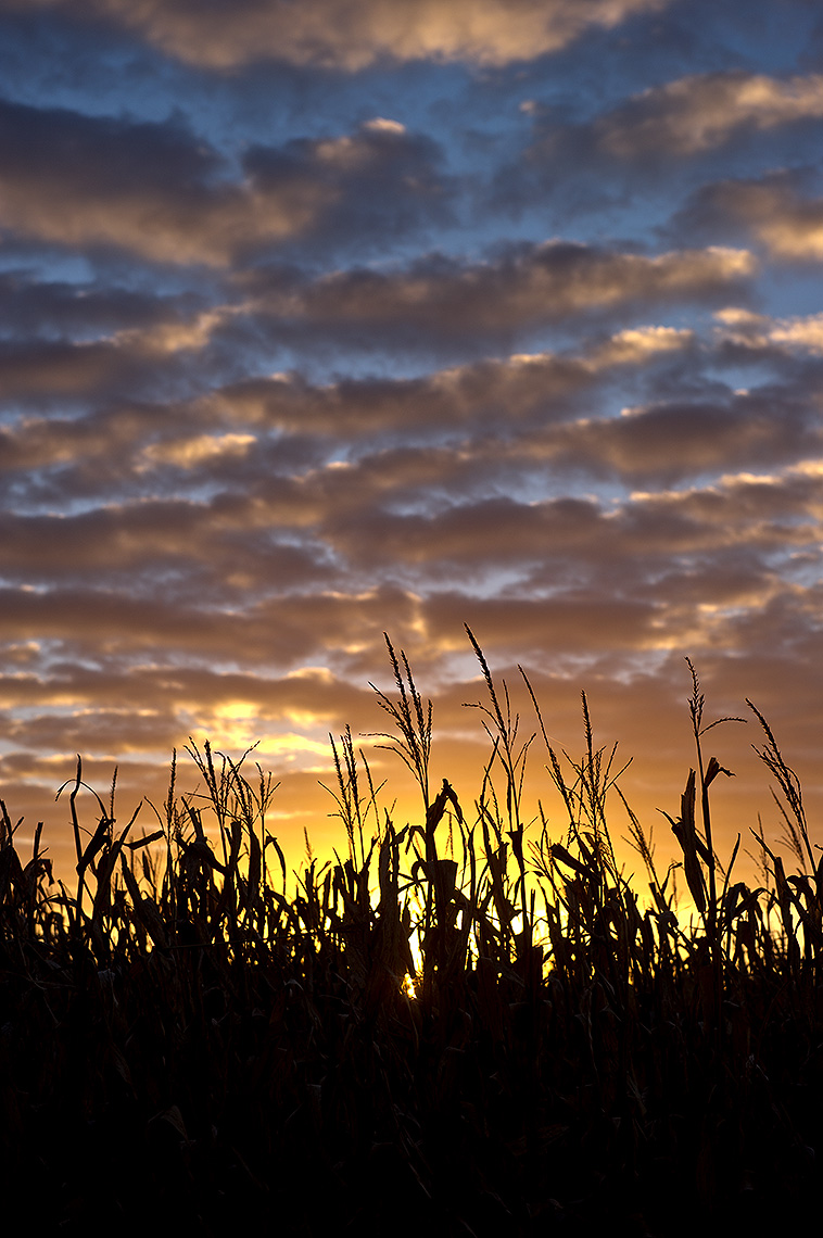 Cornfield and Sunset Photograph