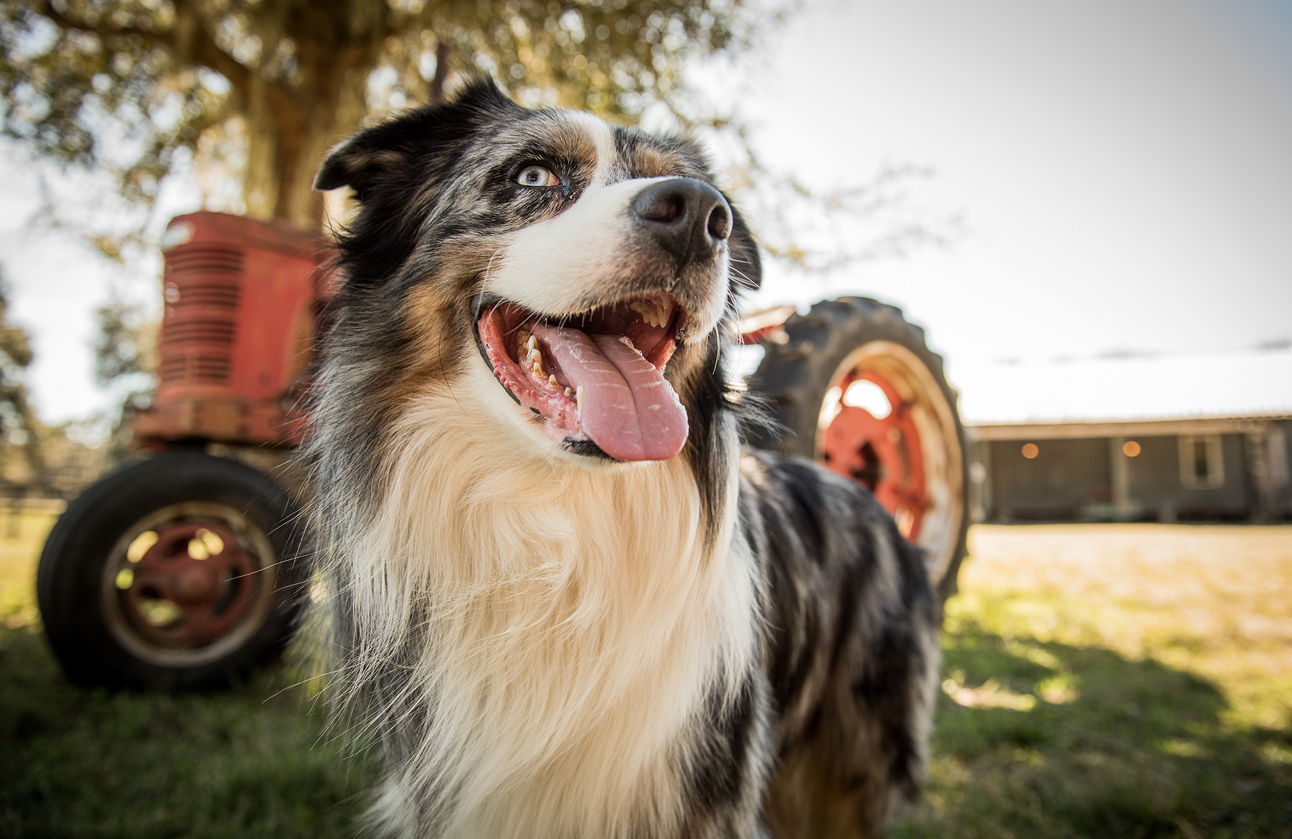 Pet and Farm Photographer