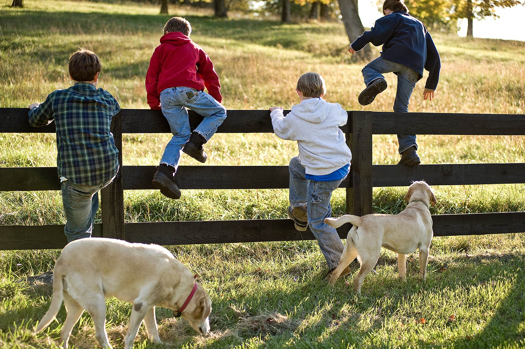 Kids and Dogs Playing on the Farm