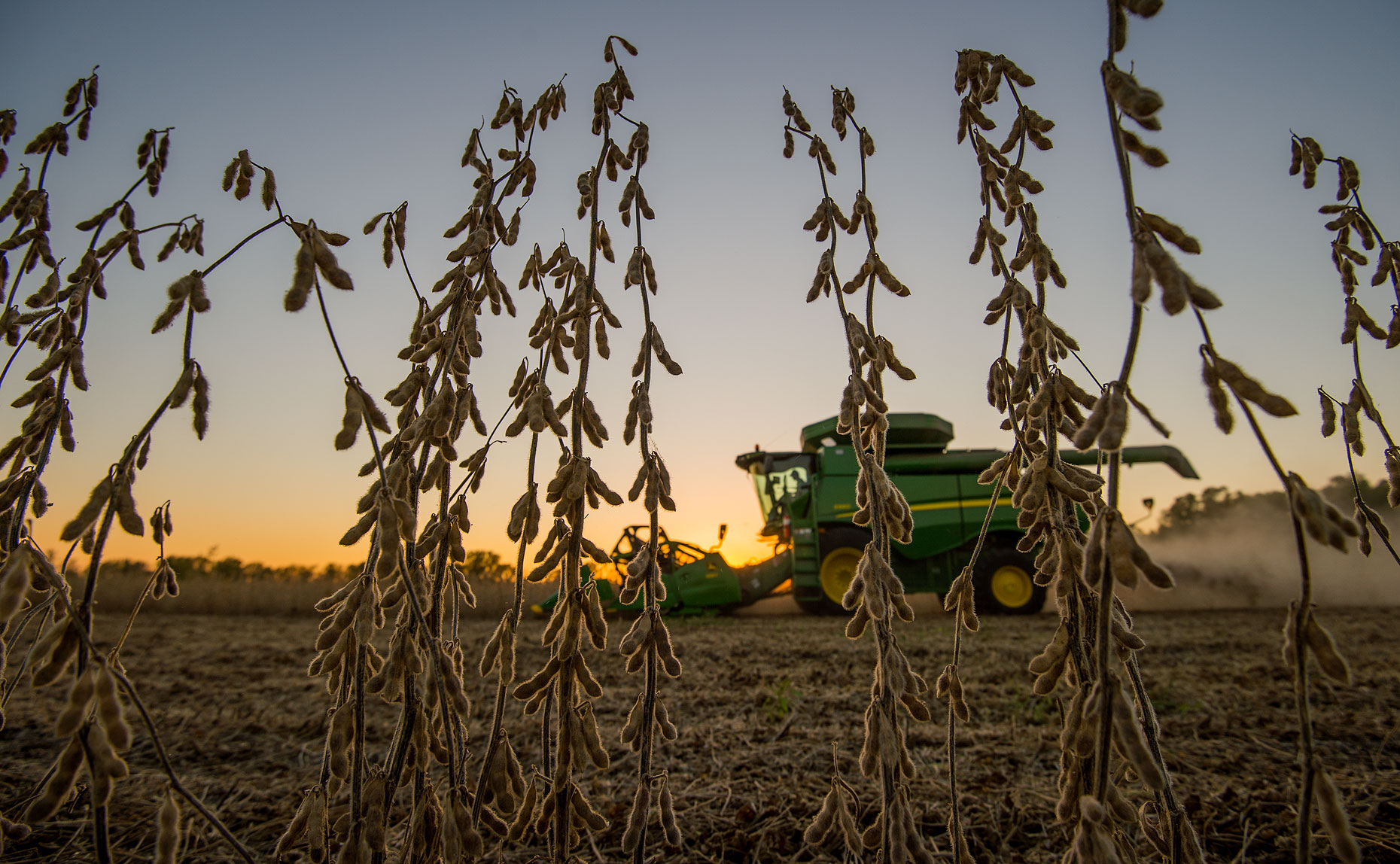 Soybean Harvest Photography