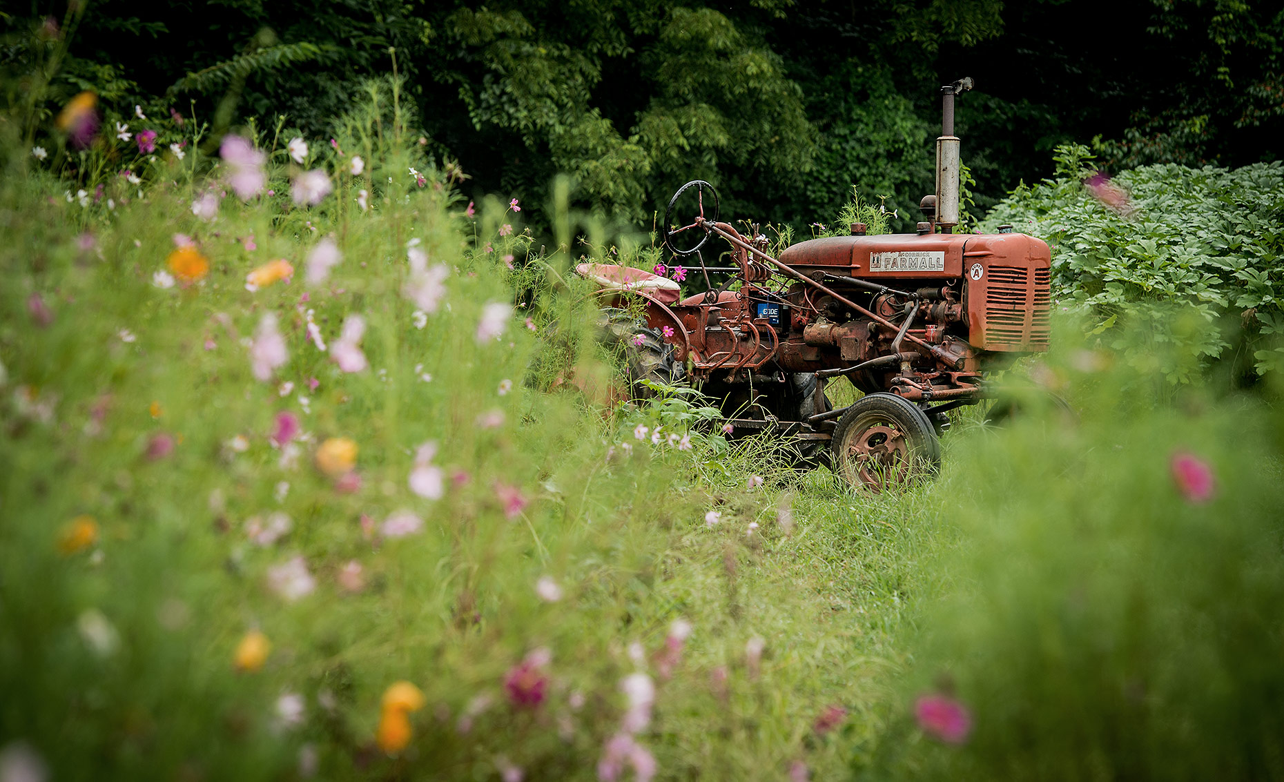 Tractor and Flowers Photography