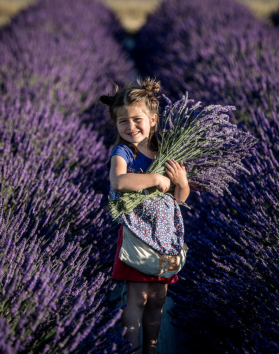 Girl Gathering Lavender Photo